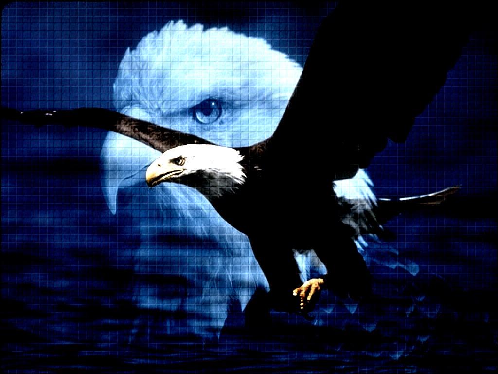 Unduh 96  Gambar Burung Elang Perkasa HD  Free